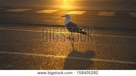 Möwe, Vogel, Straße, Sonnenuntergang, Sonnenaufgang, Hafen, Fliegen