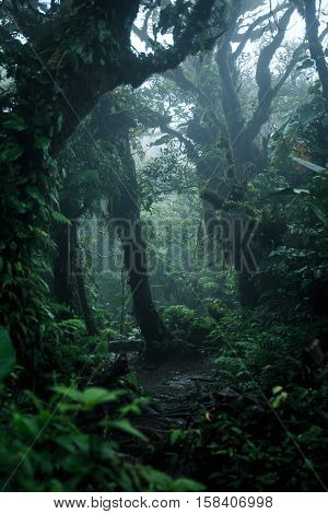 Deep in lush rainforest La Fortuna Costa Rica