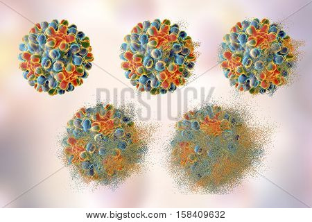Destruction of hepatitis B virus, 3D illustration. Conceptual image for anti-hepatitis treatment. Stages of viral destruction