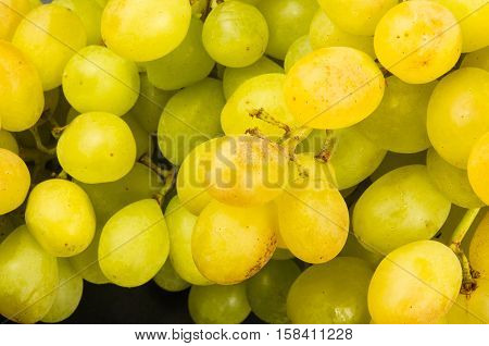 Large grapes cluster amber color on black background