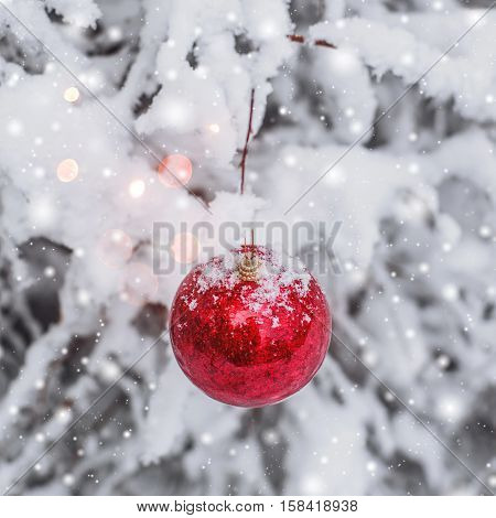 Red Christmas ball hanging on a snowy branch in the winter forest. Merry Christmas and Happy New Year theme