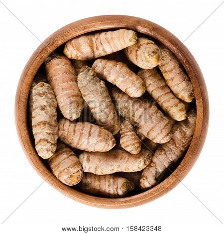 Fresh turmeric rhizomes in wooden bowl. Curcuma longa, also tumeric, used as spice for curries, for coloring mustard and in Siddha medicine. Isolated macro food photo close up from above over white.
