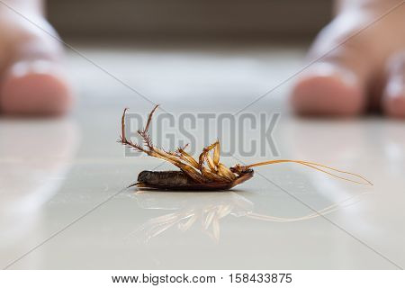 Dead cockroach on floor . . .