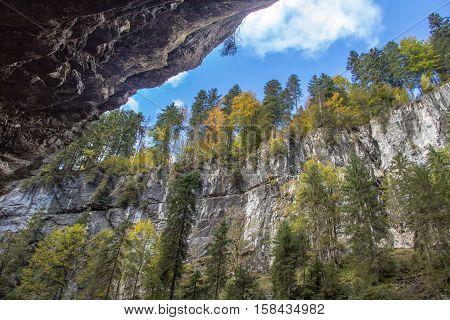 Allgaeu (Germany) / autumn forest growing on high cliffs