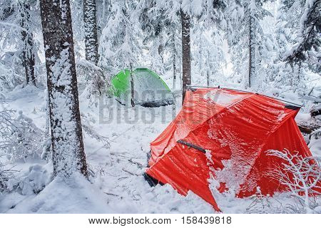 Red and green tent in winter forest. Tourist camp in snowy forest. Two tents in the snow in winter time