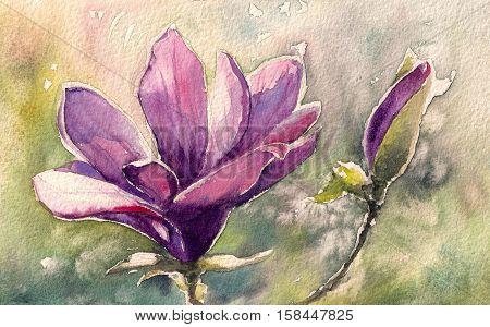 Pink Magnolia watercolor painting illustration greeting card.