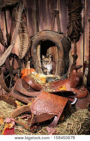 Farm cat sitting inside an antique horse collar.