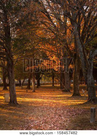 Solemn Autumn Trail through Civil War Battlefield