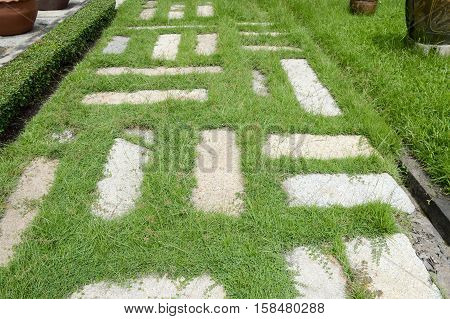 close up green grass in nature garden