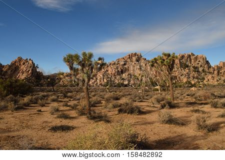 the scenic view of the rocks and cactus
