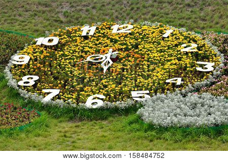 Garden-bed like a big summer clock Tick-tock