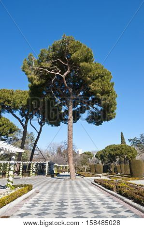 Pine tree and pergolas in Cecilio Rodriguez Gardens, Retiro Park, Madrid, Spain