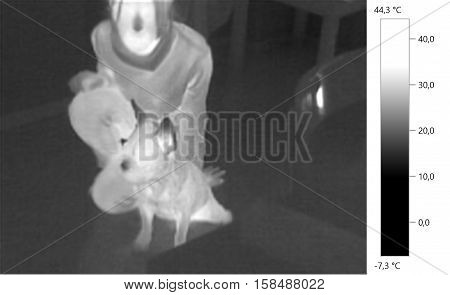 Thermal image photo french bulldog whit person dog gray scale