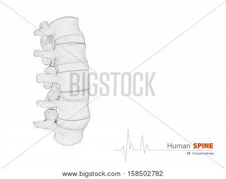 3D Illustration Of Human Spine Abstract Scientific Background