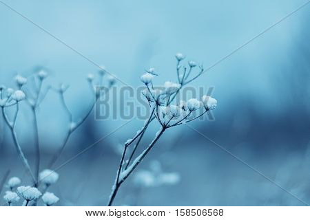 Fragile wild flowers with snow in winter