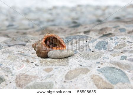 This Is A Land Hermit Crab