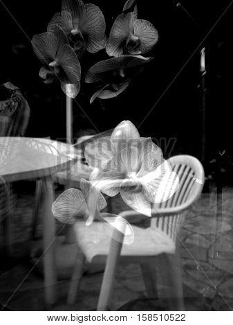 Reflexion in a window of orchids and a chair