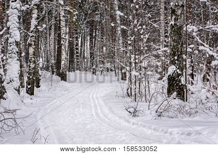 Ski track in winter forest. Cross-country sport. Active lifestyle