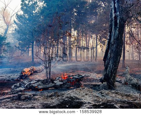 the effects of a forest fire the fire still burns