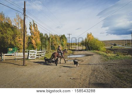 EL CALAFATE, ARGENTINA: Man riding with his dogs in Argentine Patagonia