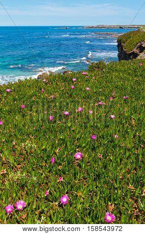 Summer Blossoming Atlantic Coastline (galicia).