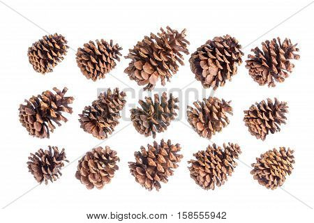 Selection of fifteen different natural brown pine or spruce cones isolated on white arranged in three neat rows pointing diagonally to the right