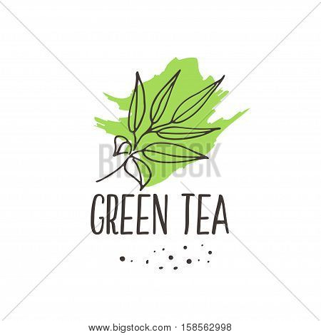 Green tea print background. Organic herbal hot drinks package design. Hand sketched fruits and berries illustration collection. Vector design.
