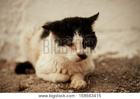 Black and white street cat with a wounded eye