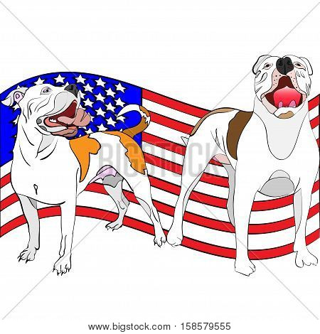 hand-drawn outlined vector illustration of a couple of american bulldogs in front of a waving american flag