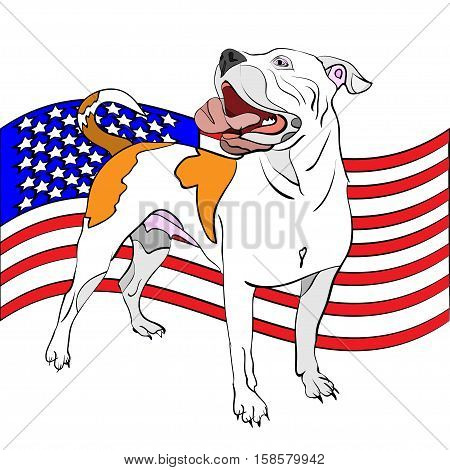 vector illustration of hand-drawn outlined american bulldog in front of waving american flag