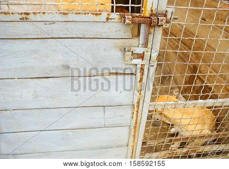Abandoned dog in the kennel, homeless dog behind bars in an animal shelter.Dog behind the fence looking out through the wire of his cage