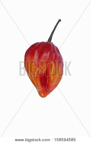 Jamaican hot pepper (Capsicum chinense Scotch Bonnet). Called Scotty bons Bonney pepper and Carribean red pepper also. Image of single pepper isolated on white background