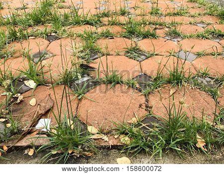 Grasses growing between floor paving block stones fallow