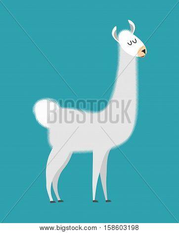 Lama Isolated. Cute Alpaca Animal. South American Mammal