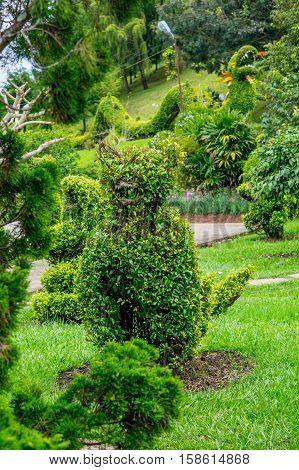 Park of flowers at Dalat Vietnam - Landscape desighn with figure loping of bush