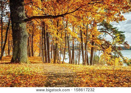 Autumn image near Kaunas Lagoon the tree leaves yellowing