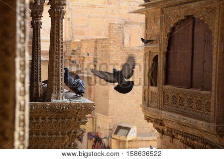 Pigeons in Patwa haveli, Jaisalmer, Rajasthan, India