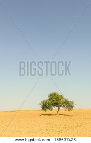 Landscape with solitary tree in Munstermaifeld in Germany.