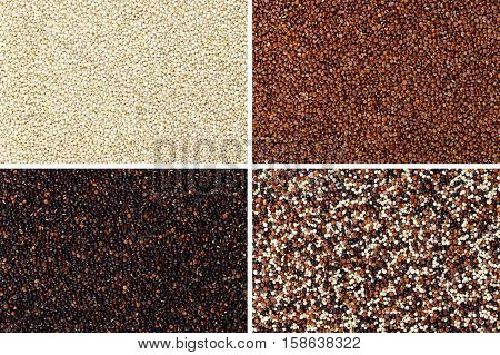 Yellow, red, black and mixed quinoa seeds rectangular surfaces. Edible fruits of grain crop Chenopodium quinoa in the Amaranth family, a pseudocereal. Isolated macro food photo close up from above.