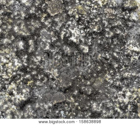 background black mold on the spoiled food abstraction mold infection