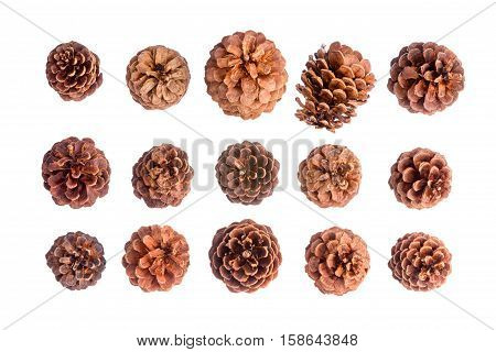 Variety Of Fifteen Different Brown Pine Cones