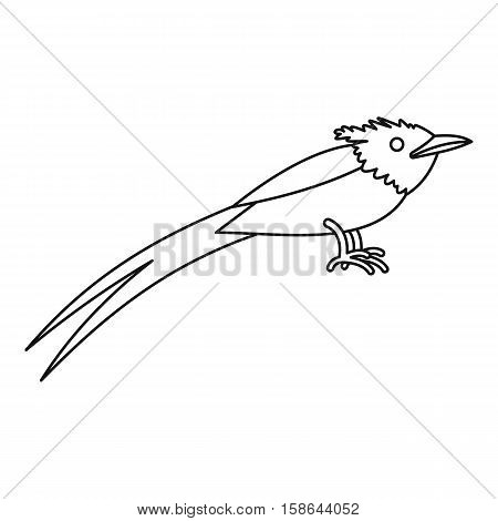 Asian paradise flycatcher icon. Outline illustration of asian paradise flycatcher vector icon for web