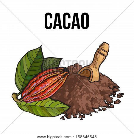 Hand drawn heap of cocoa powder with a wooden scoop and ripe cacao fruit, sketch vector illustration isolated on white background. Colorful illustration of cacao fruit and ground cocoa powder
