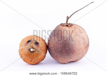 coconut shell and  brown ripe coconut for coconut milk or oil coconut  on white background healthy fruit food isolated