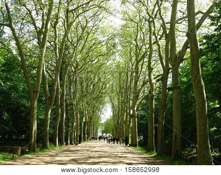 Tree line avenue in Chenonceau in May, France