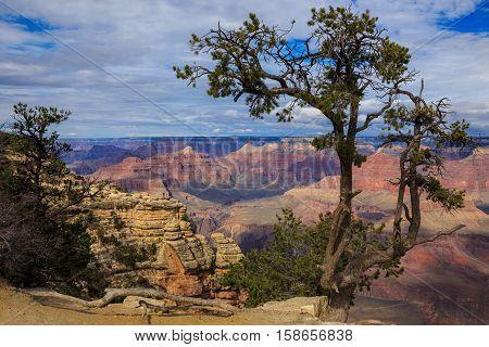 Impressive Tree On South Rim Of Grand Canyon, Arizona, United States
