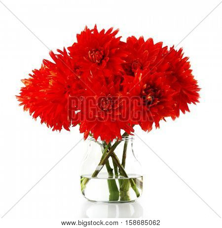 Beautiful red dahlia flowers in vase, isolated on white