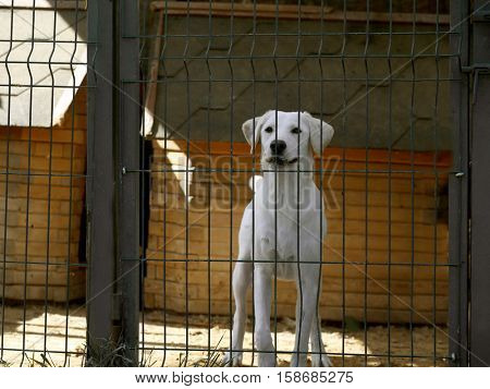 White homeless dog in animal shelter cage