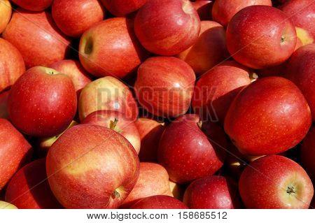 Apples in a Bushel Basket at the Farmer's Market