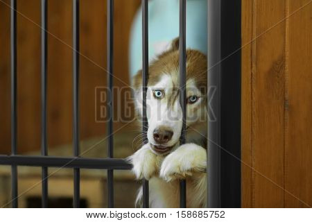 Cute homeless laika in animal shelter cage